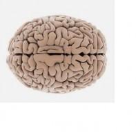 alt-cerebro 2